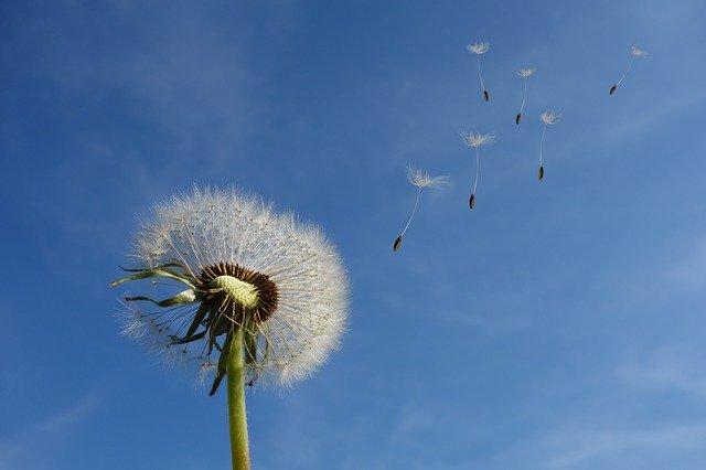 O floare în vânt